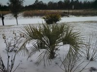 My icy front yard and palm tree. Longs, SC January 29, 2014
